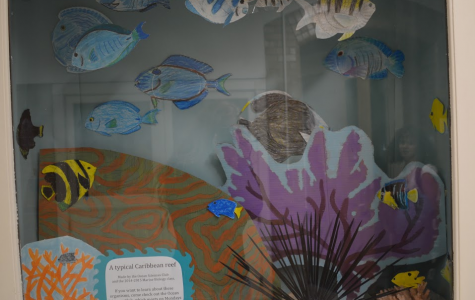Under the Sea: A Typical Caribbean Reef