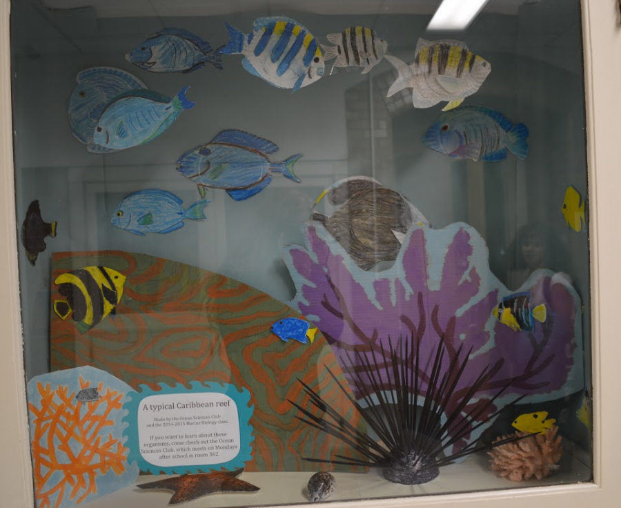 Under the Sea: A Typical Caribbean Reef, was created jointly by the Marine Biology class and the Ocean Sciences Club in 2015. Sara Hogenboom / Sagamore Staff