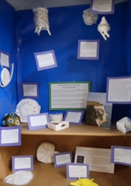 This display case showcases microscopic protists, tiny ocean animals that contribute to 2/3 of oceanic oxygen production. This display case was created by the Marine Biology class of 2016. Sara Hogenboom / Sagamore Staff