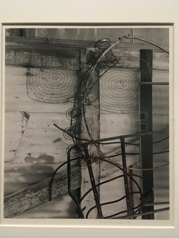 Review: Imogen Cunninghan, In Focus at MFA Boston