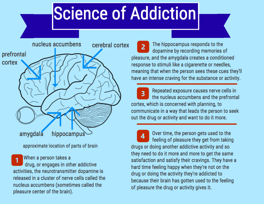 Addiction is mainly a result of the brain's natural response to a feeling of pleasure caused by dopamine.