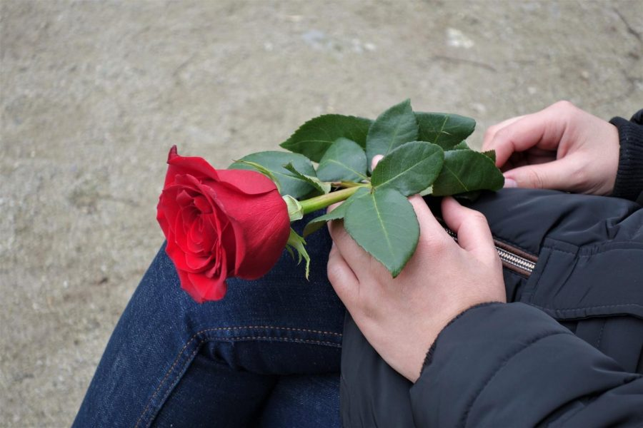 At the end of every episode the bachelor gives out roses to contestants that will remain on the show.