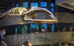 The spiral ramp forms the main part of the aquarium, leading up from the penguins to the top of the tank. A right whale skeleton can be seen hanging from much of the aquarium.